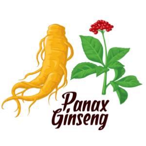 panax-ginseng-multivit-xtra