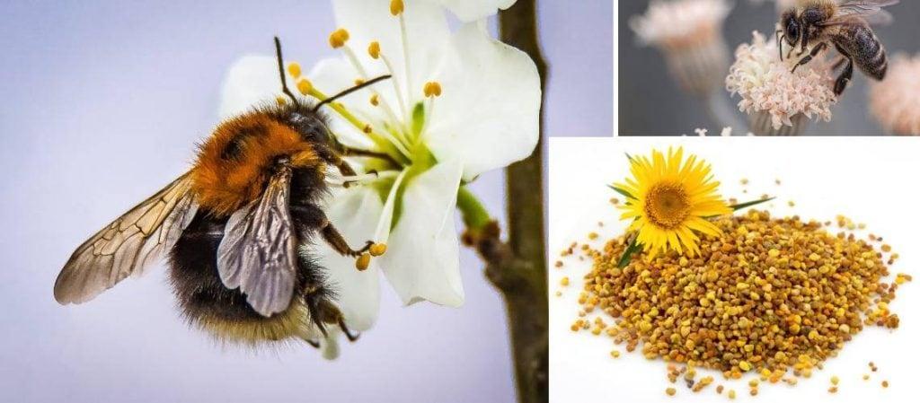 bijenpollen-kopen-7bees
