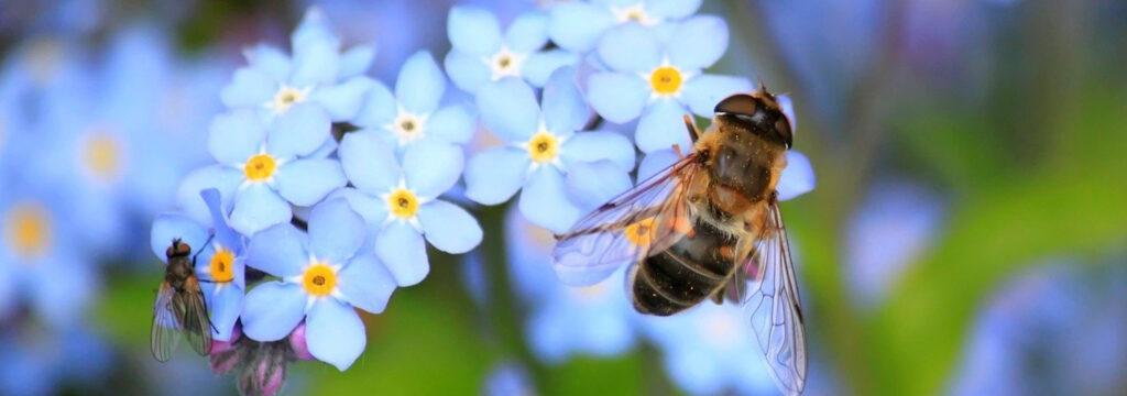 bijenpollen-kopen-bijen-bloem